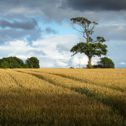 A Tree of Two Halves - Landscape Photography by Paul Sutton at Postscriptphoto